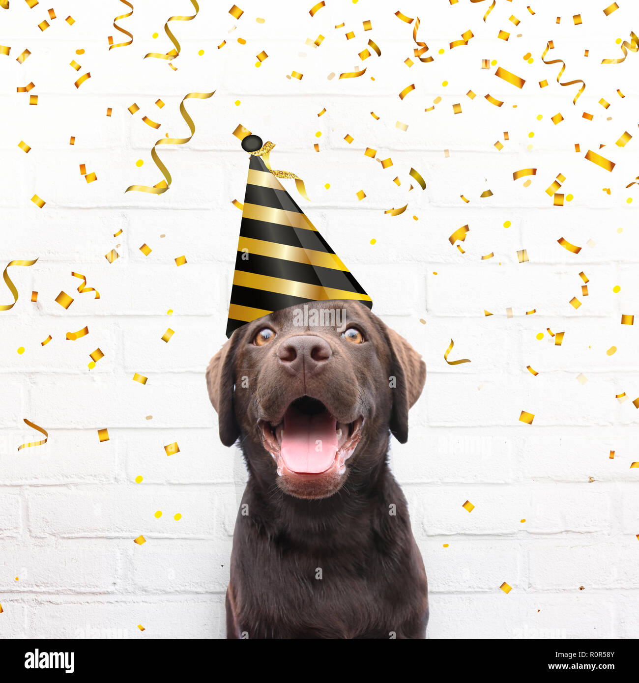 Happy Birthday Card Crazy Dog With Party Hat Is Smiling In De Camera Agianst White Brick Background Golden Confetti Celebrate His