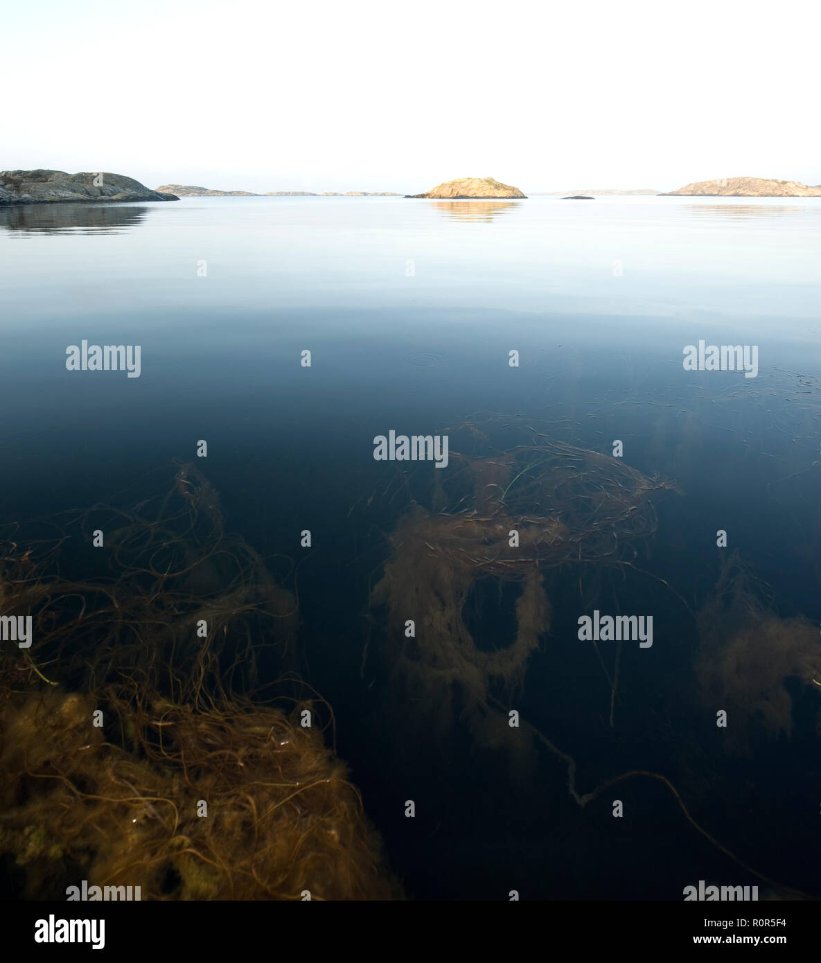 Marine, life, sea, life, ocean, plants, animals, organisms, salt, water, coastal, fundamental, level, nature, Shorelines, habitats, - Stock Image