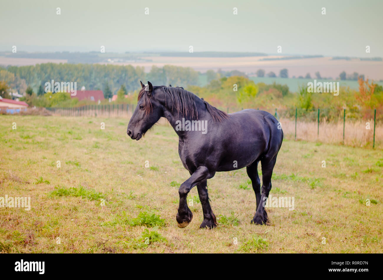 Beautiful Black Horse Posing In The Farm Stock Photo Alamy