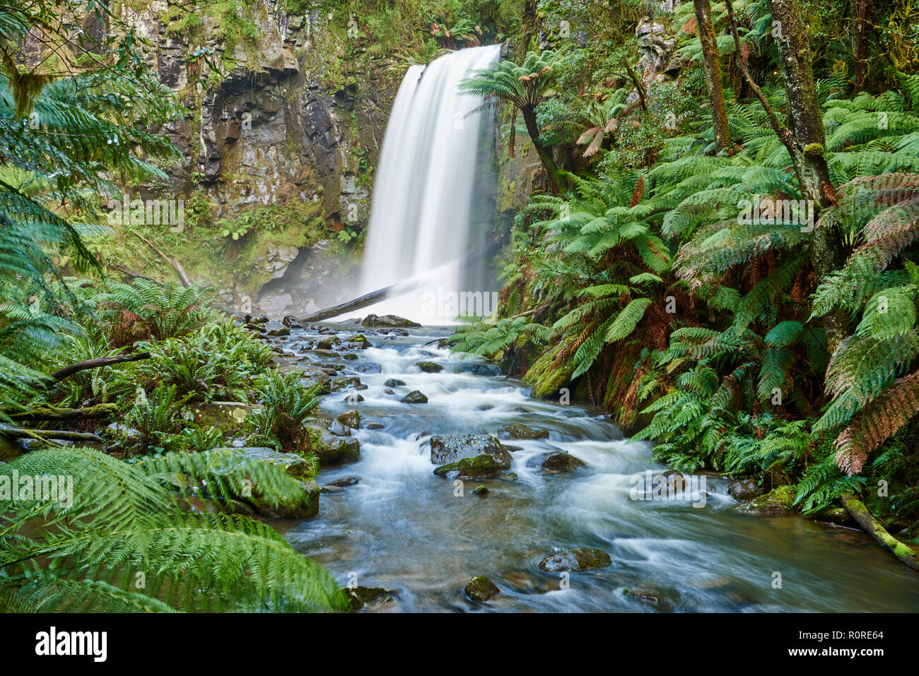 Hopetoun Falls in the rainforest, Great Otway National Park, Otways Region, Australia - Stock Image