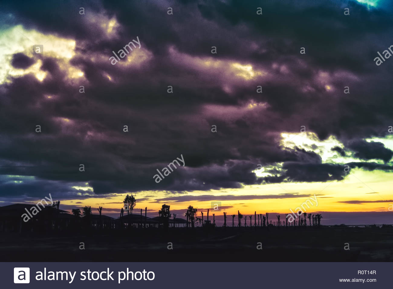 magenta sunset on the lake with backlight palms on the horizon - Stock Image