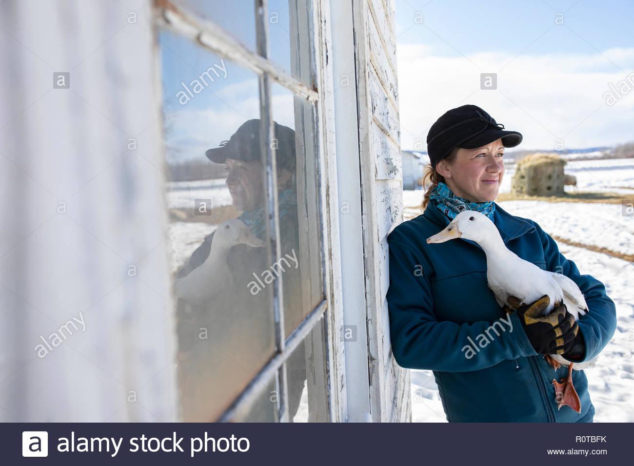 Female farmer holding duck outside barn - Stock Image