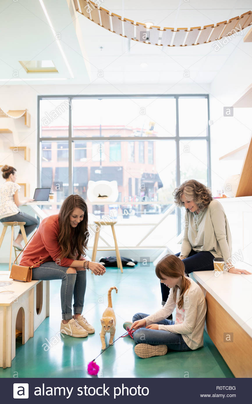 Multi-generation women playing with kitten in cat cafe - Stock Image