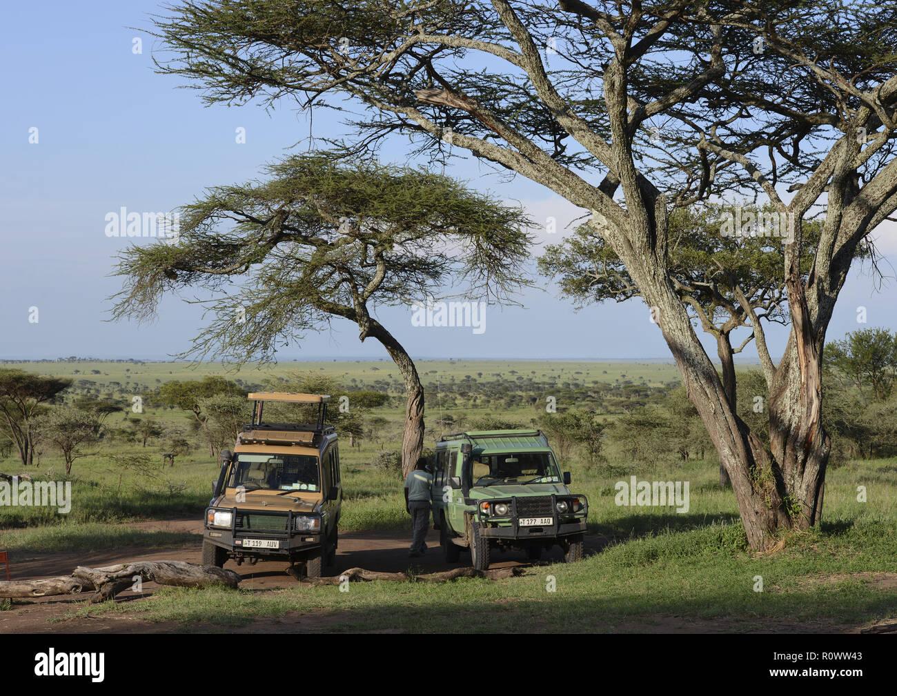 Safari-Fahrzeuge unter Akazien, Serengeti NP, Tansania - Stock Image