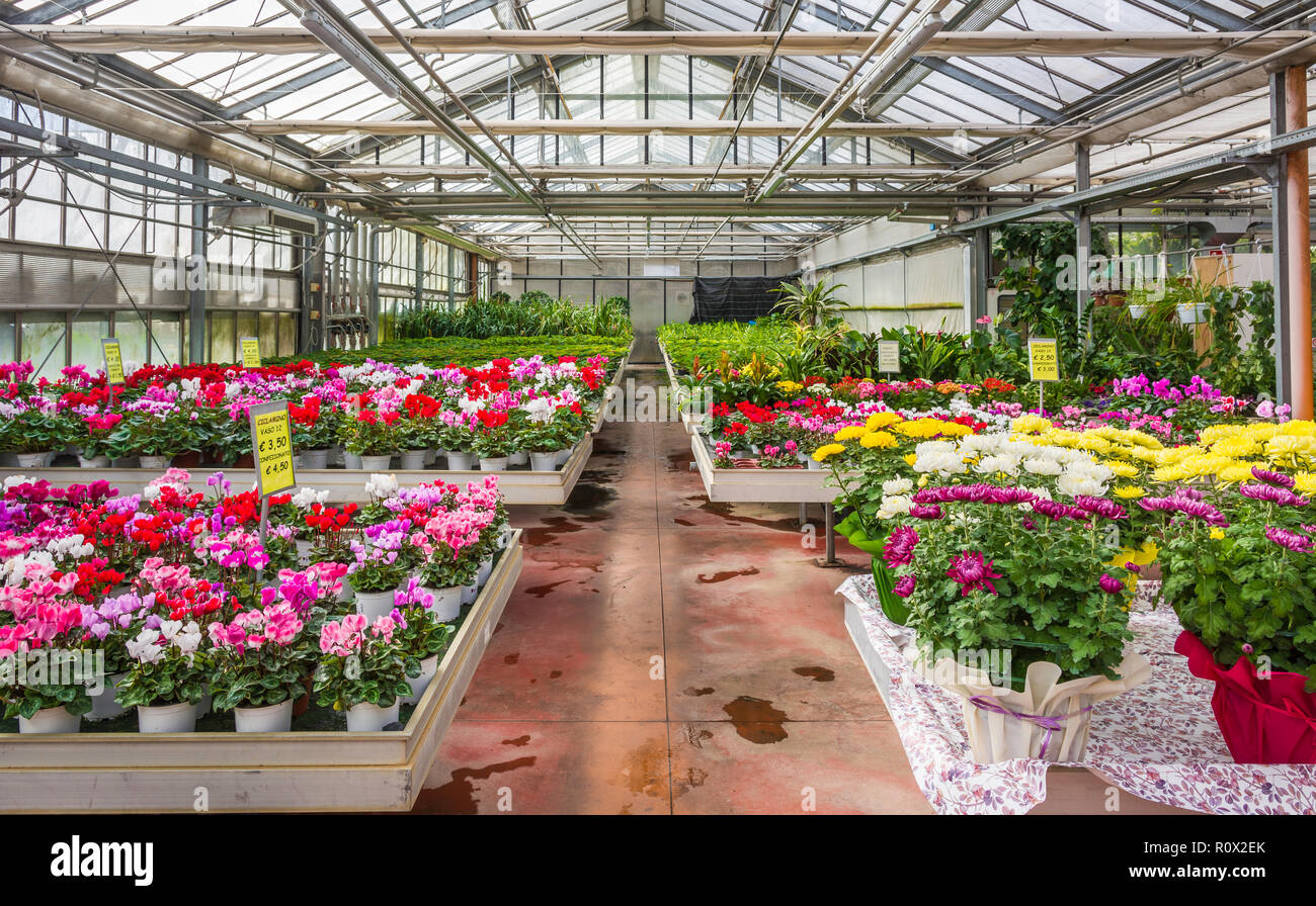 Interior Of An Large Greenhouse With Blossoming Seasonal Flowers