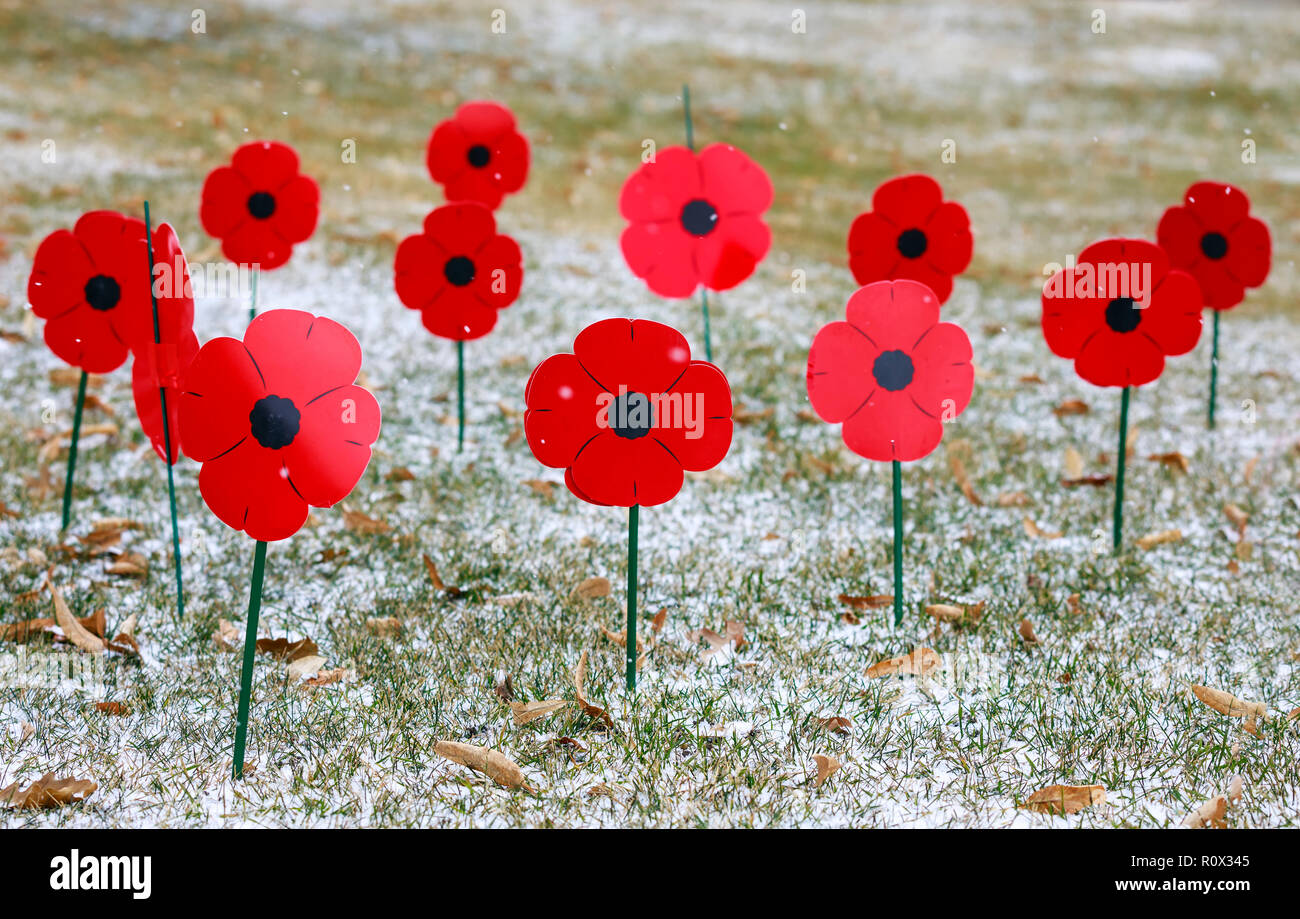 Poppies in honour of Remembrance Day, Winnipeg, Manitoba, Canada. - Stock Image