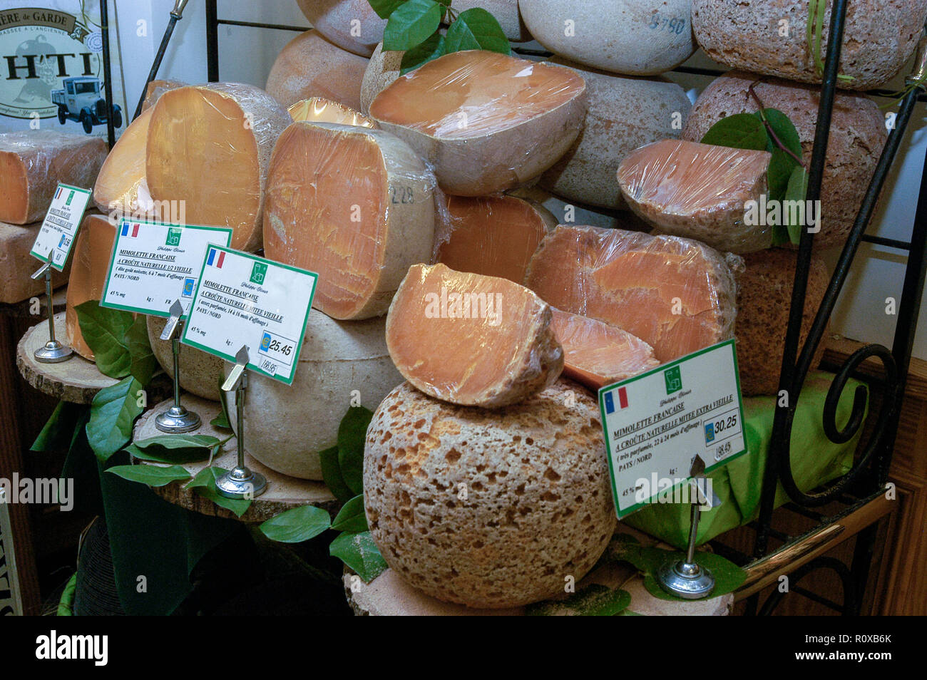 a row of the 18th months old mature minolette cheeses the only rh alamy com