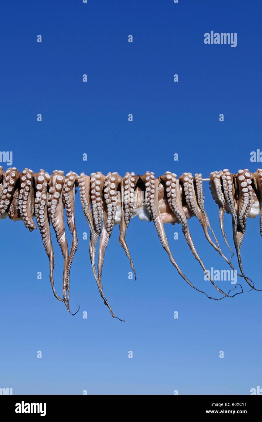 Fresh Octopi hanging on line - Stock Image