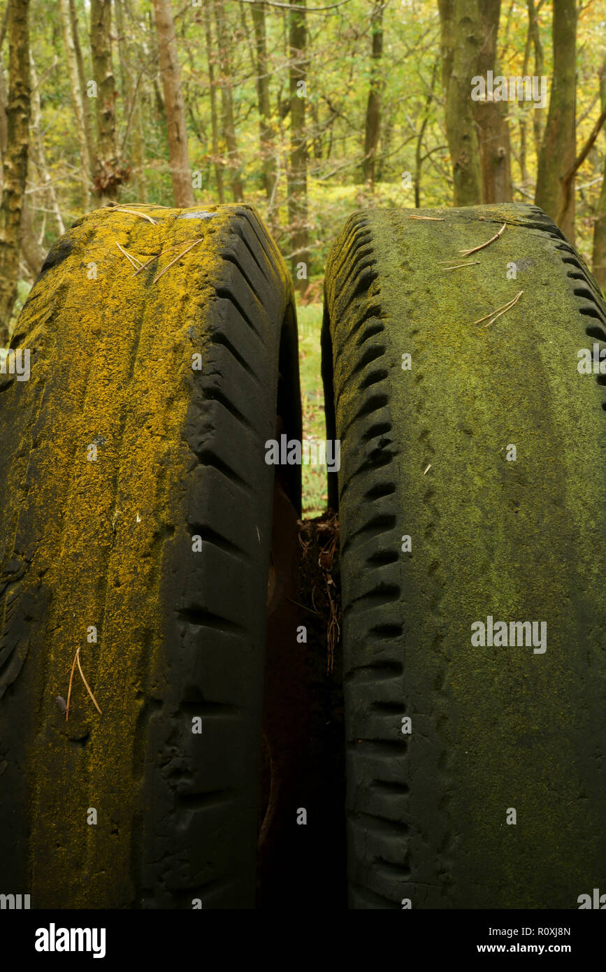 A pair of old worn tyres in a woodland setting. - Stock Image