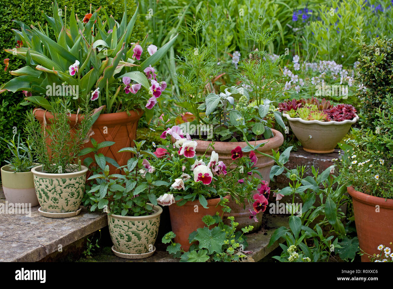A Variety Of Potted Plants Outside Stock Photo 224326262 Alamy