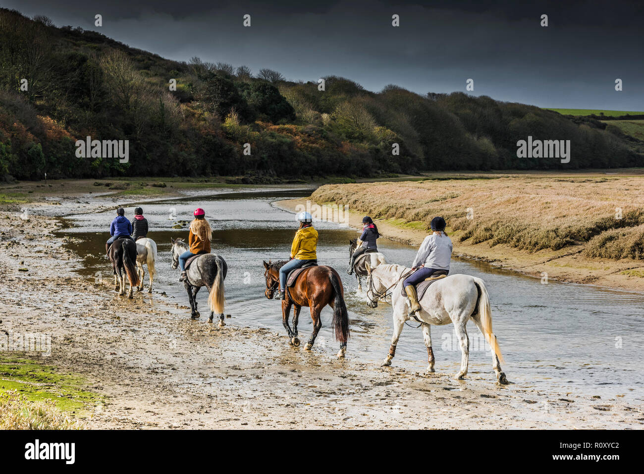 Pony trekking along the Gannel River at low tide in Newquay Cornwall. - Stock Image