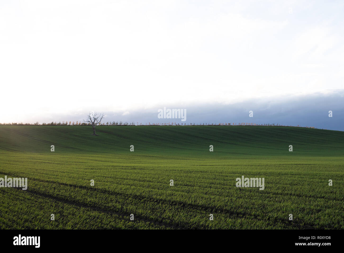 A freshly plowed  wheat field in Cheltenham, Gloucestershire Stock Photo