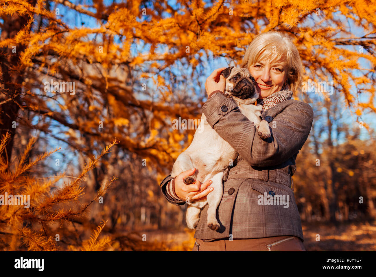 Master walking pug dog in autumn park. Happy woman hugging pet. - Stock Image