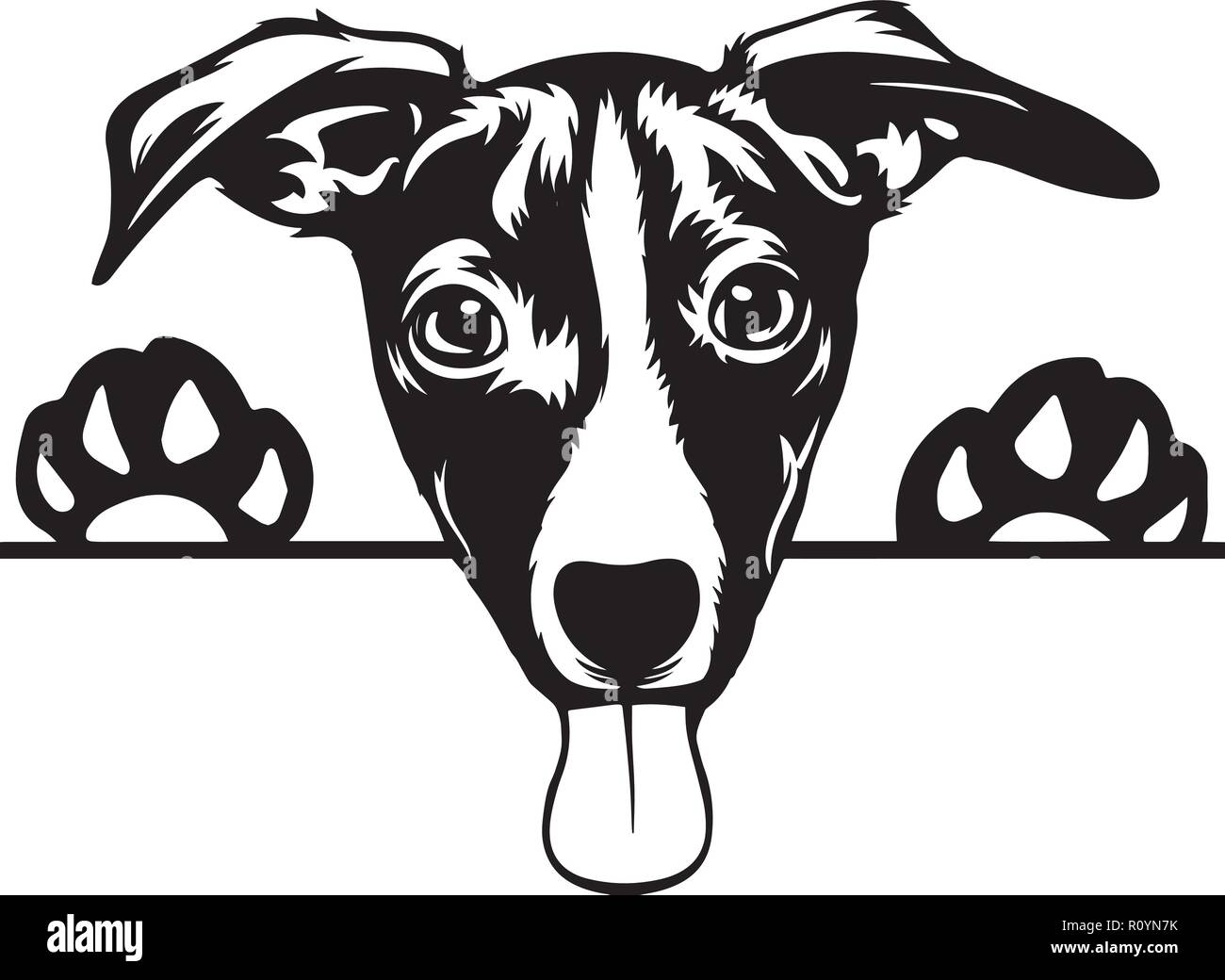 Jack Russell Terrier Dog Breed Head Isolated Pedigree Pet Portrait Smiling Happy Puppy Face Animal Cartoon Illustration Portrait Art Artwork Cute - Stock Image