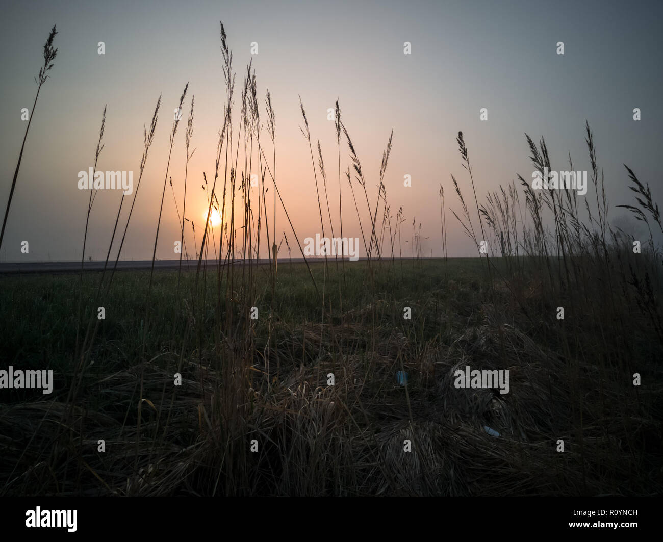Grass Stalks in an Early Morning Besides Countryside Road with a Heavy Mist Covering the Background, and Sun Shining Through them - Stock Image