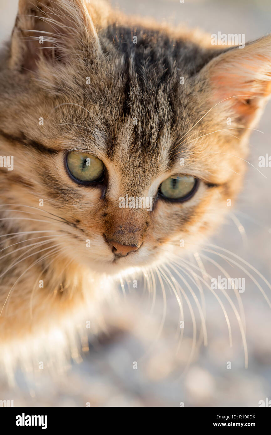 Portrait of a cute small cat. Close up - Stock Image