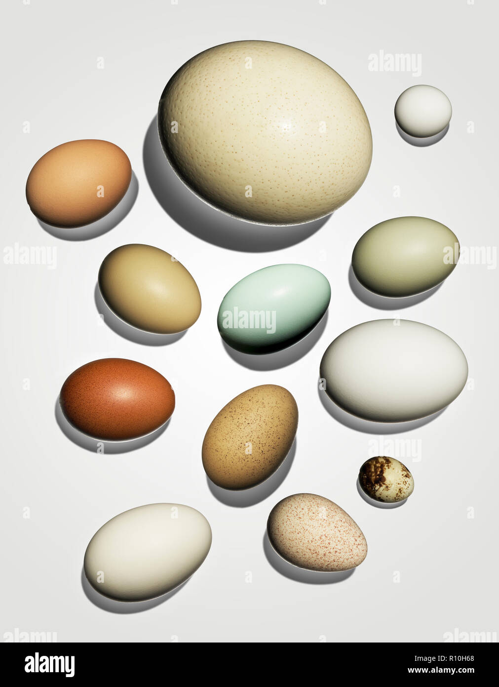 Collection of eggs, varying sizes and colors, white background - Stock Image