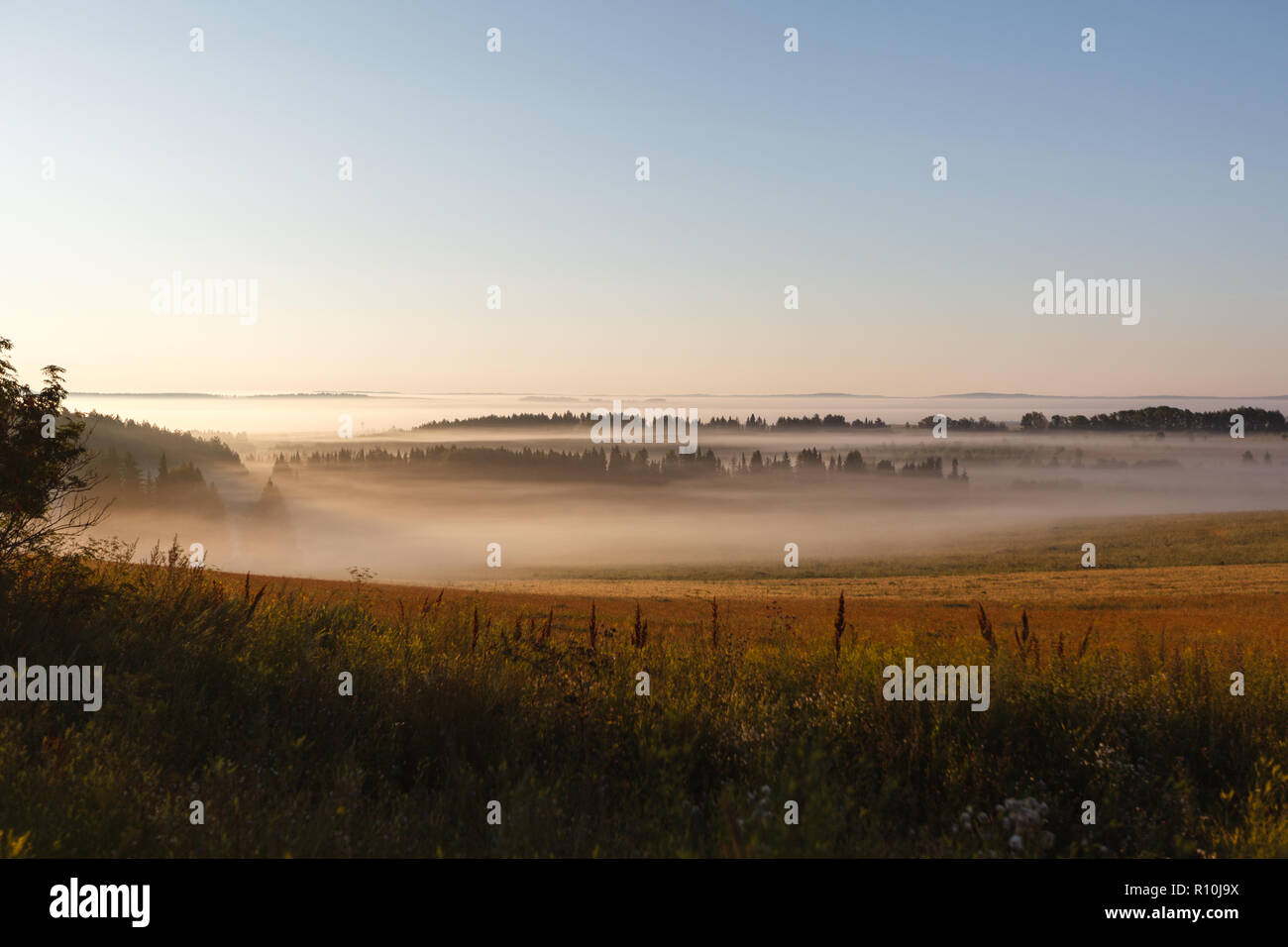 The May field in the sun and the fog - Stock Image