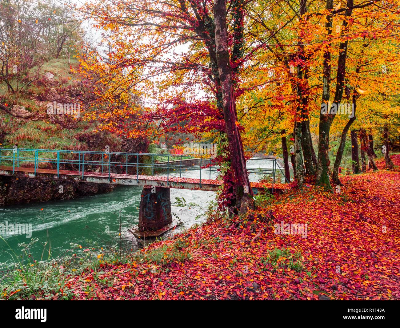Stunning Red Autumn Fall nature scenery flowing river small bridge falling leaves from numerous tree along riverline Lukezi near Rijeka in Croatia - Stock Image
