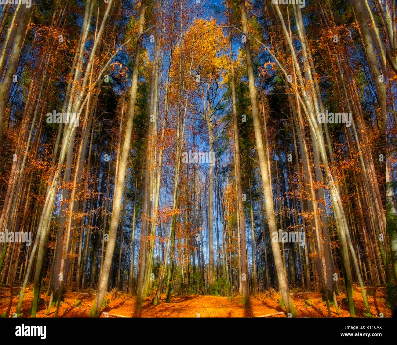 Woodland Print Wallpaper Stock Photos and Images