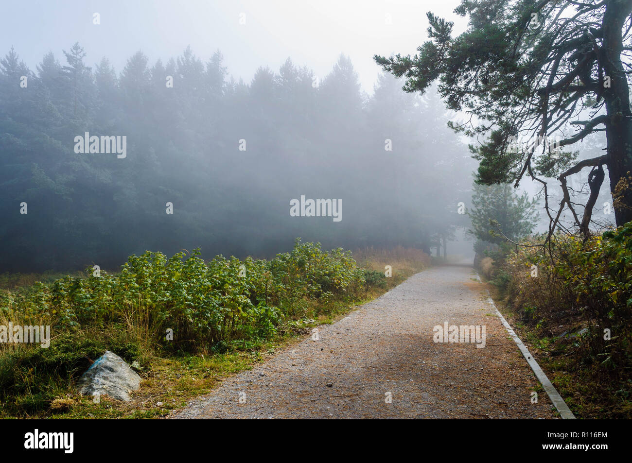 Late autumn first winter frost high in the mountains - amazing landscape under blue skies and mysterious fog Stock Photo