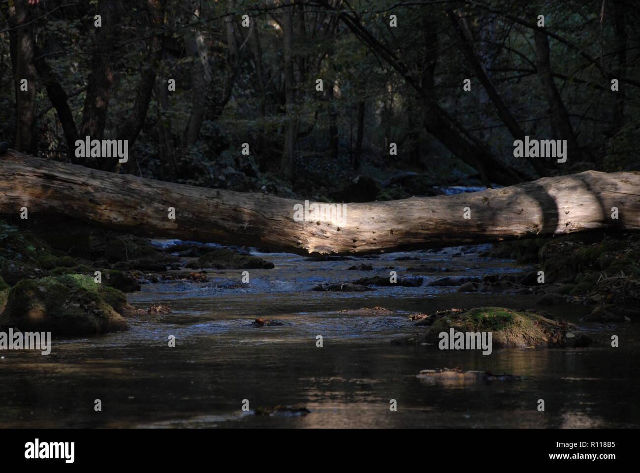 Tree above river.Romania.Nature.National Park. Nera. Adventure. Travel. Fishing. Sport. Animal - Stock Image