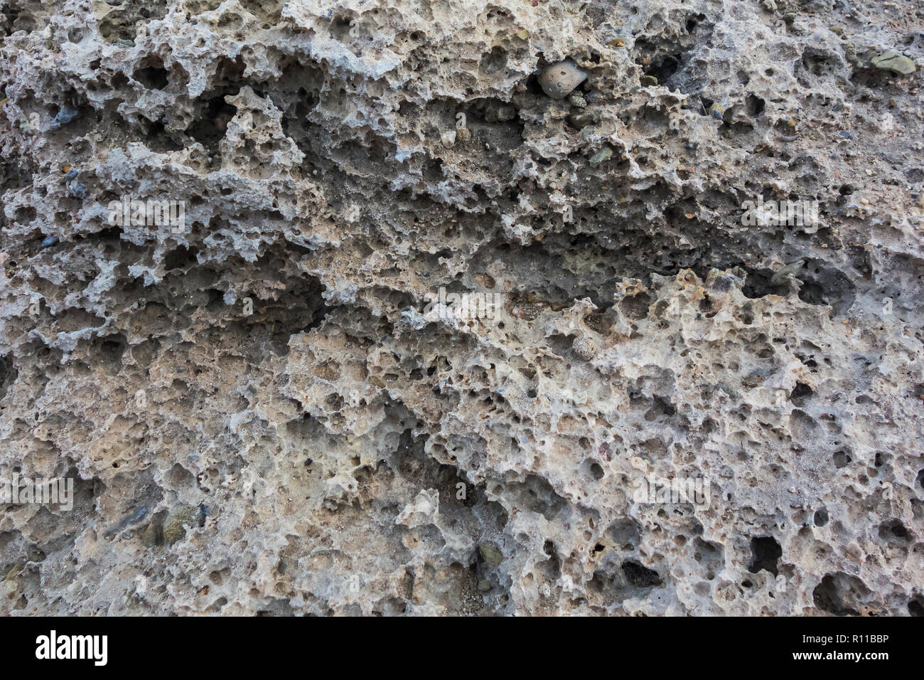 Porous natural structure of the stone. Texture rakushnjak or coquina Stock Photo