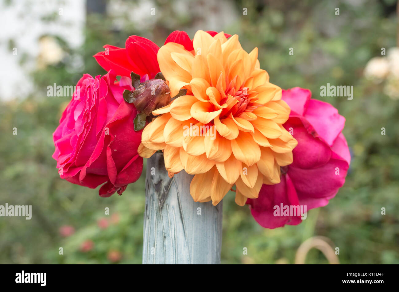 Cut-flowers Dahlia and Roses in a stem vase in UK - Stock Image
