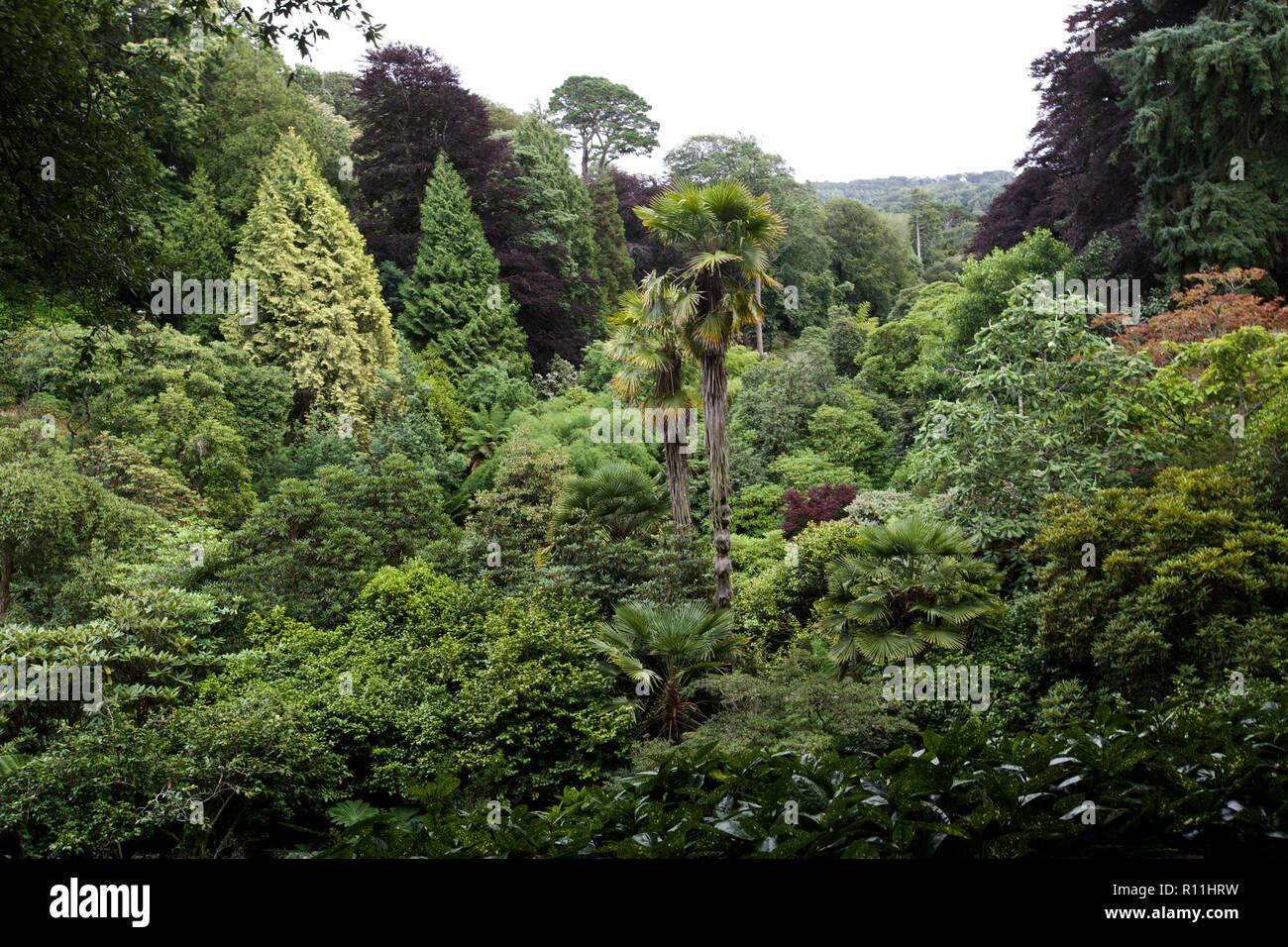 garden nature with beautiful foliage - Stock Image