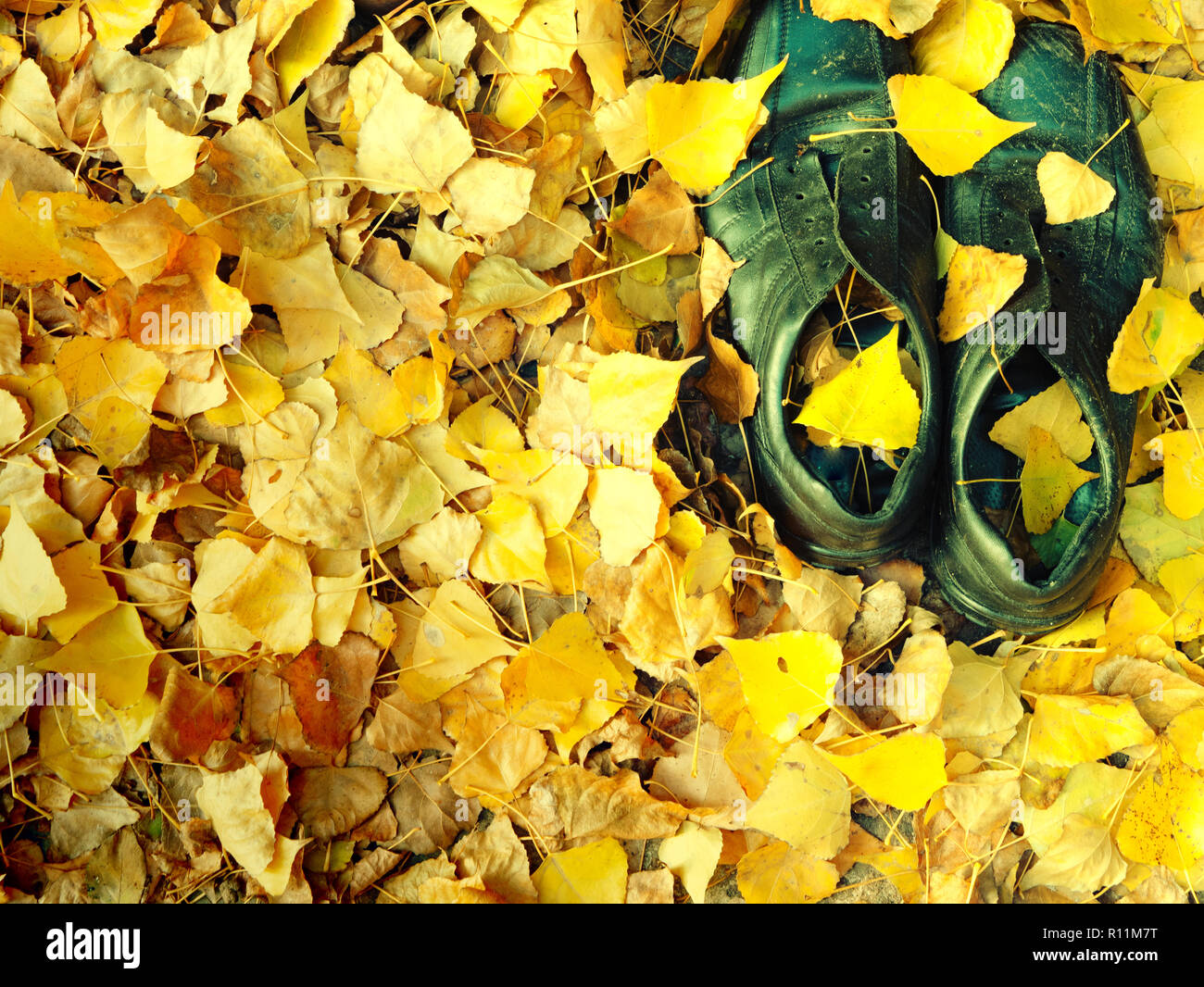 pair of old black shabby worn shoes in fallen yellow leaves foliage on a ground. autumn vibes oldness concept Stock Photo