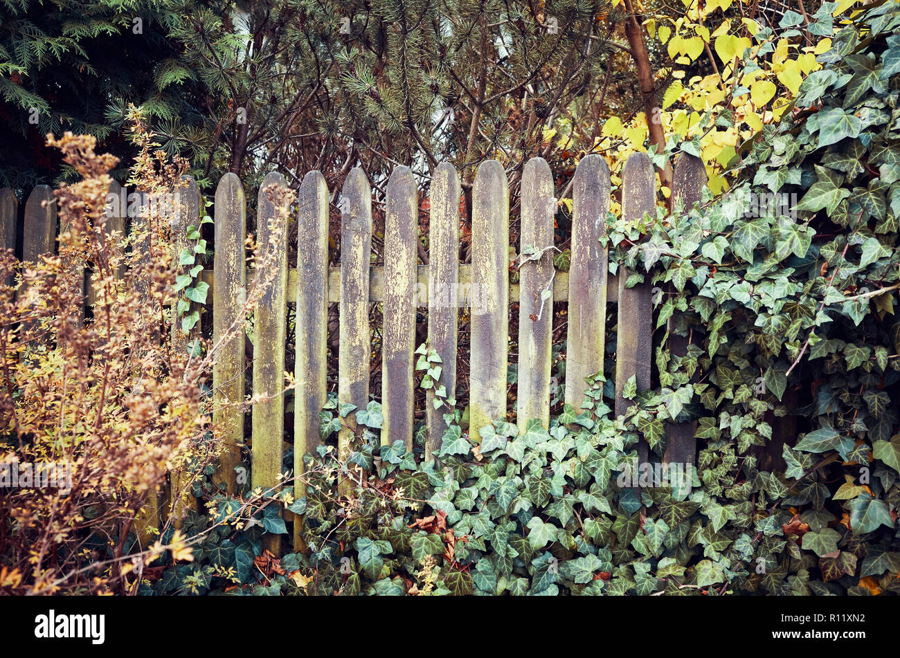 Old mossy wooden fence covered with plants, color toning applied. - Stock Image