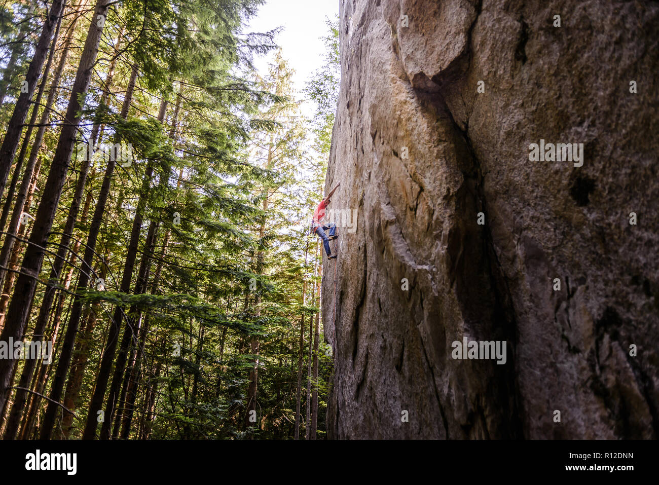 Rock climber scaling rock face close to trees, Squamish, Canada - Stock Image