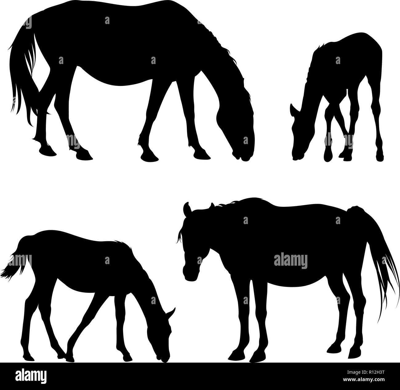 Vector silhouettes of horses and foals isolated on white - Stock Image
