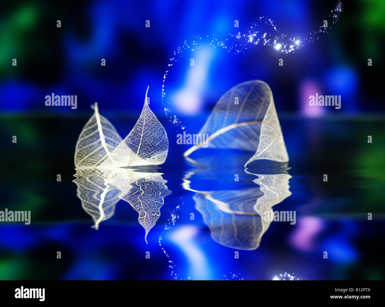 Transparent white leaves  on dark-blue backgroundwith reflection in water surface, abstract macro. Artistic image of ship in lake waters. Natural drea Stock Photo