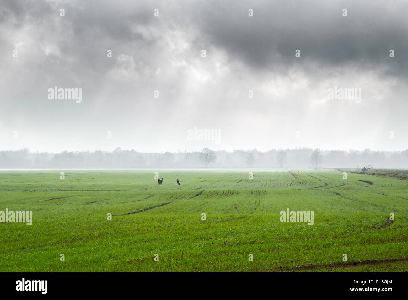 foggy morning in a village in cloudy weather in November, autumn landscape - Stock Image