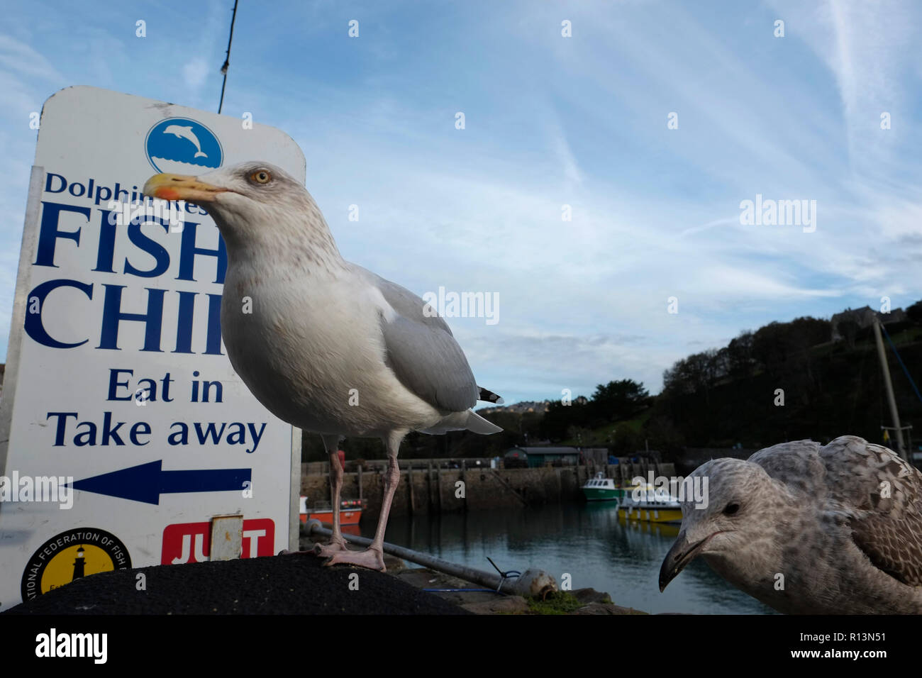 Seagulls waiting for fish and chips opposite shop in Ilfracombe harbour Devon - Stock Image
