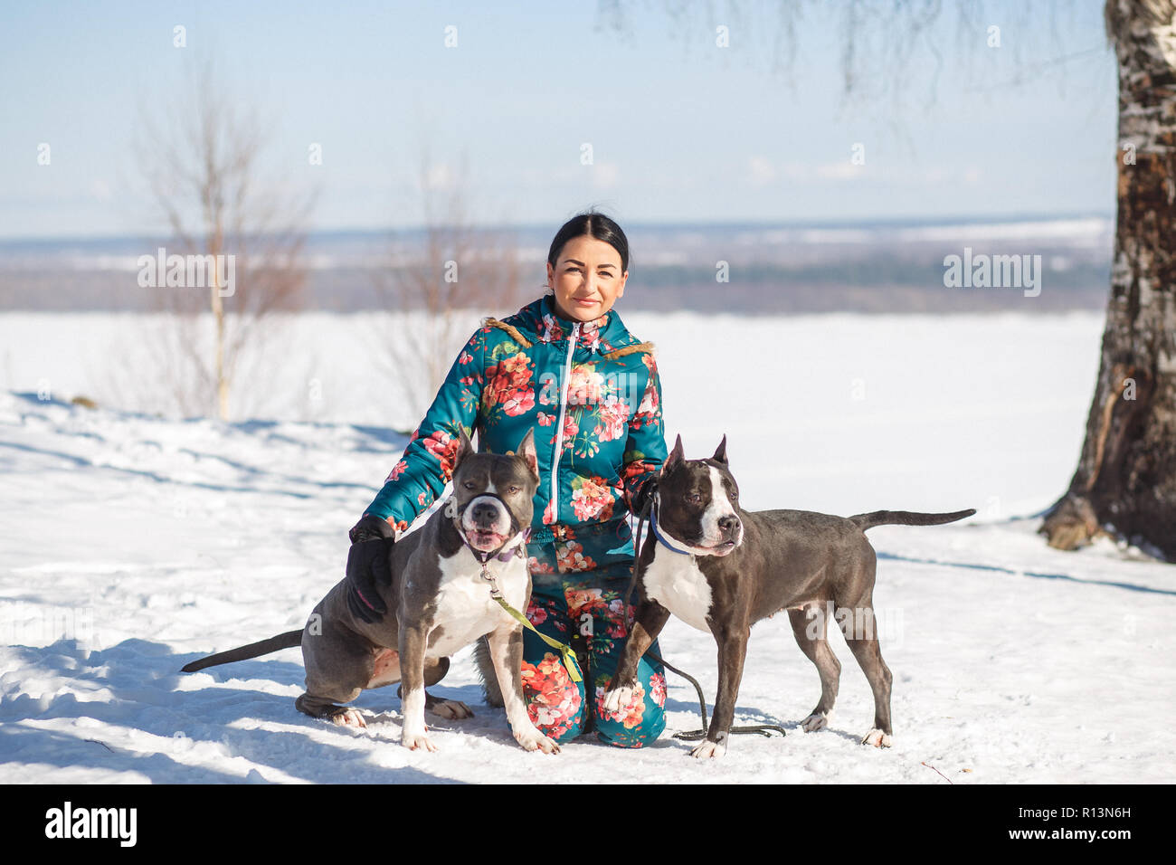 Happy young woman owner and her two American Staffordshire Terriers are hugging on the snow in winter park. - Stock Image