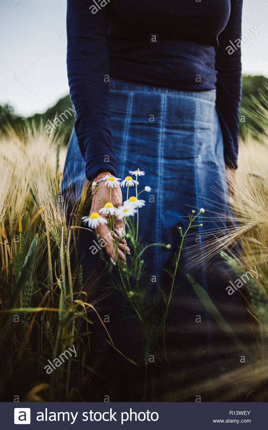 A woman picking daisies in a field Stock Photo