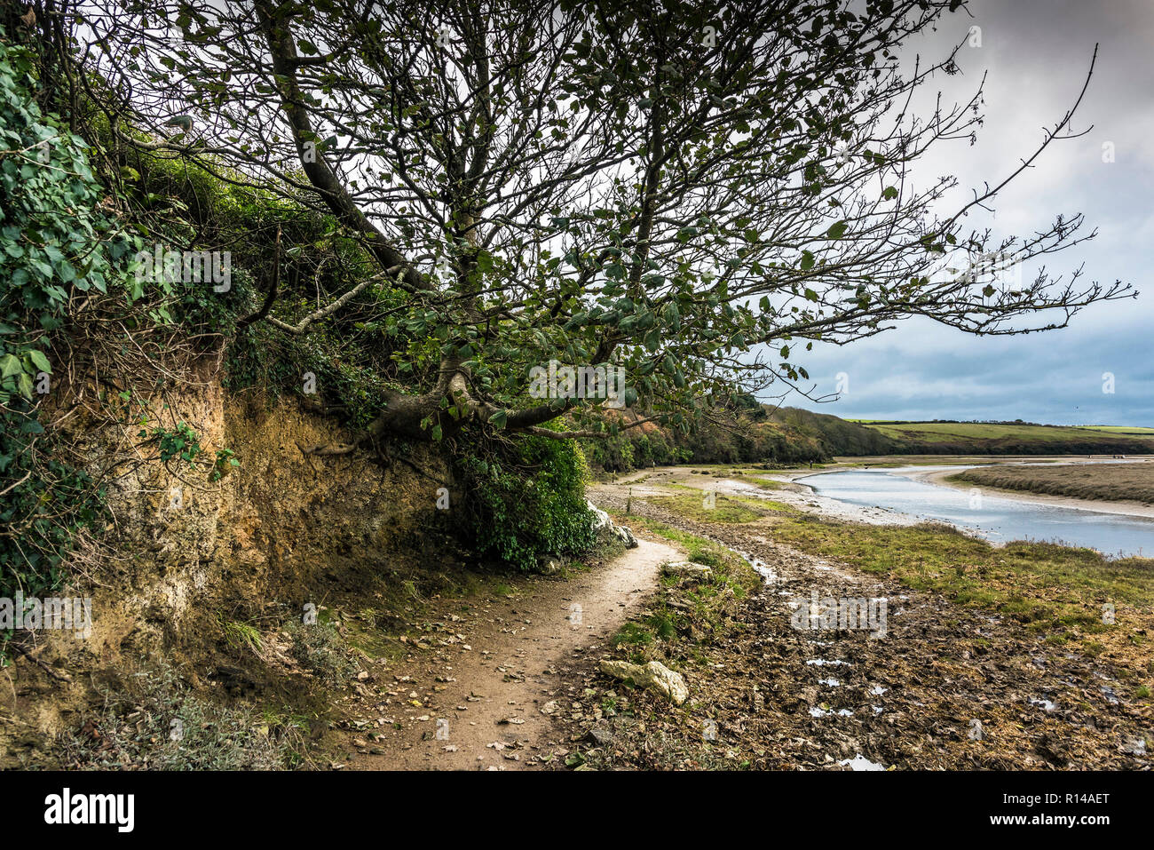 The Penpol footpath bridle path bridleway on the bank of the Gannel River in Newquay in Cornwall. - Stock Image