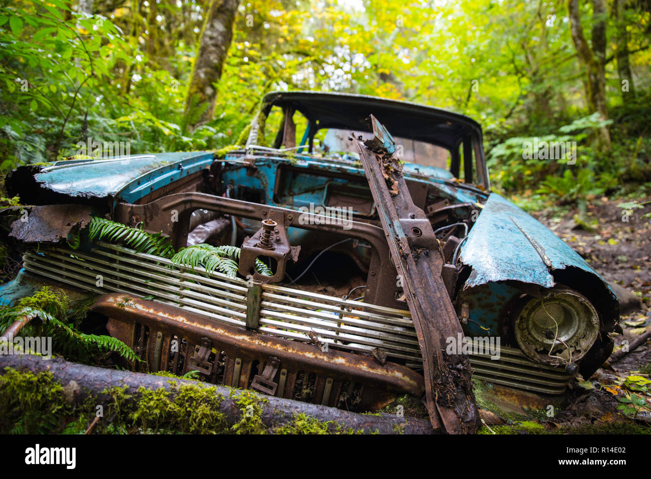 Rusty forgotten old car in the forest - Stock Image