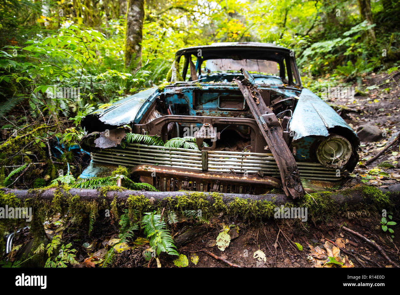 Old abandoned rusted old wreck car in the forest - Stock Image