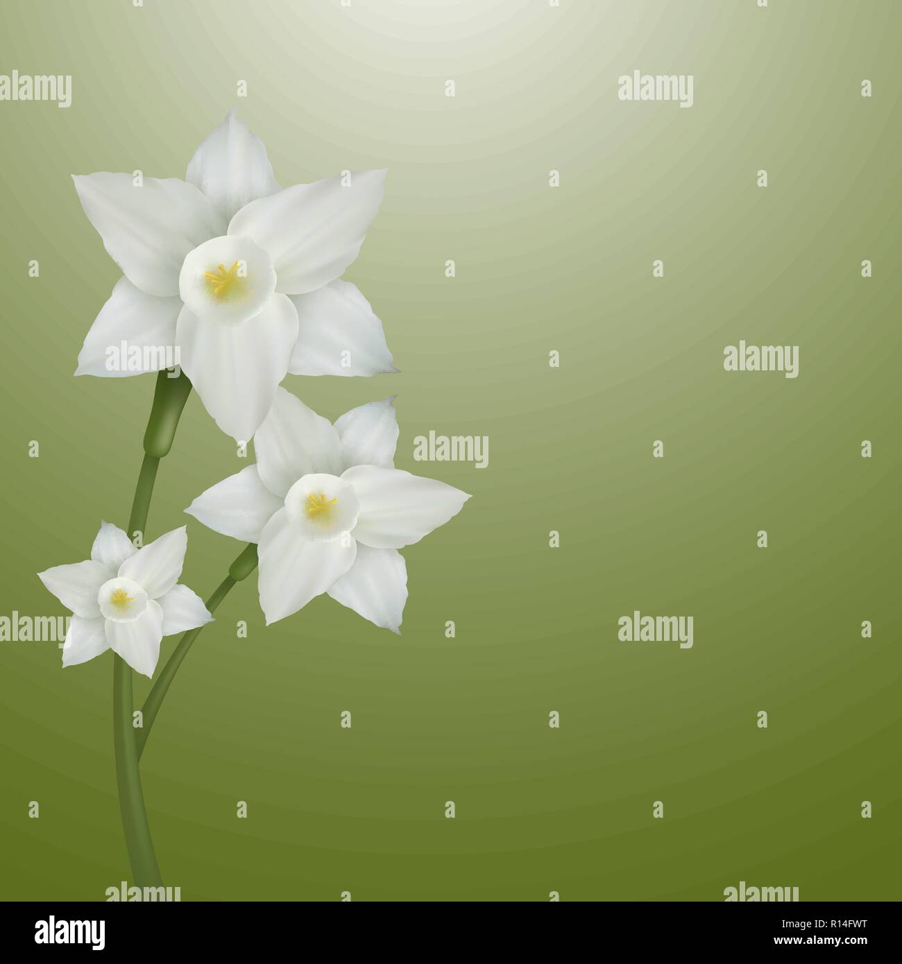 Flower of narcissus on a gentle-green background. vector illustration. - Stock Vector