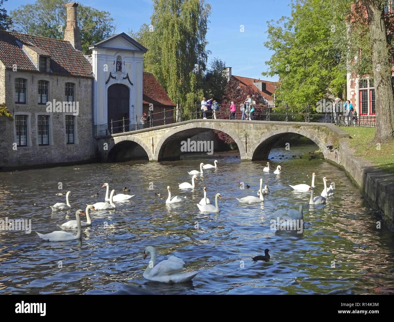 Swans near a stone arch bridge in Brudges Belgium. - Stock Image