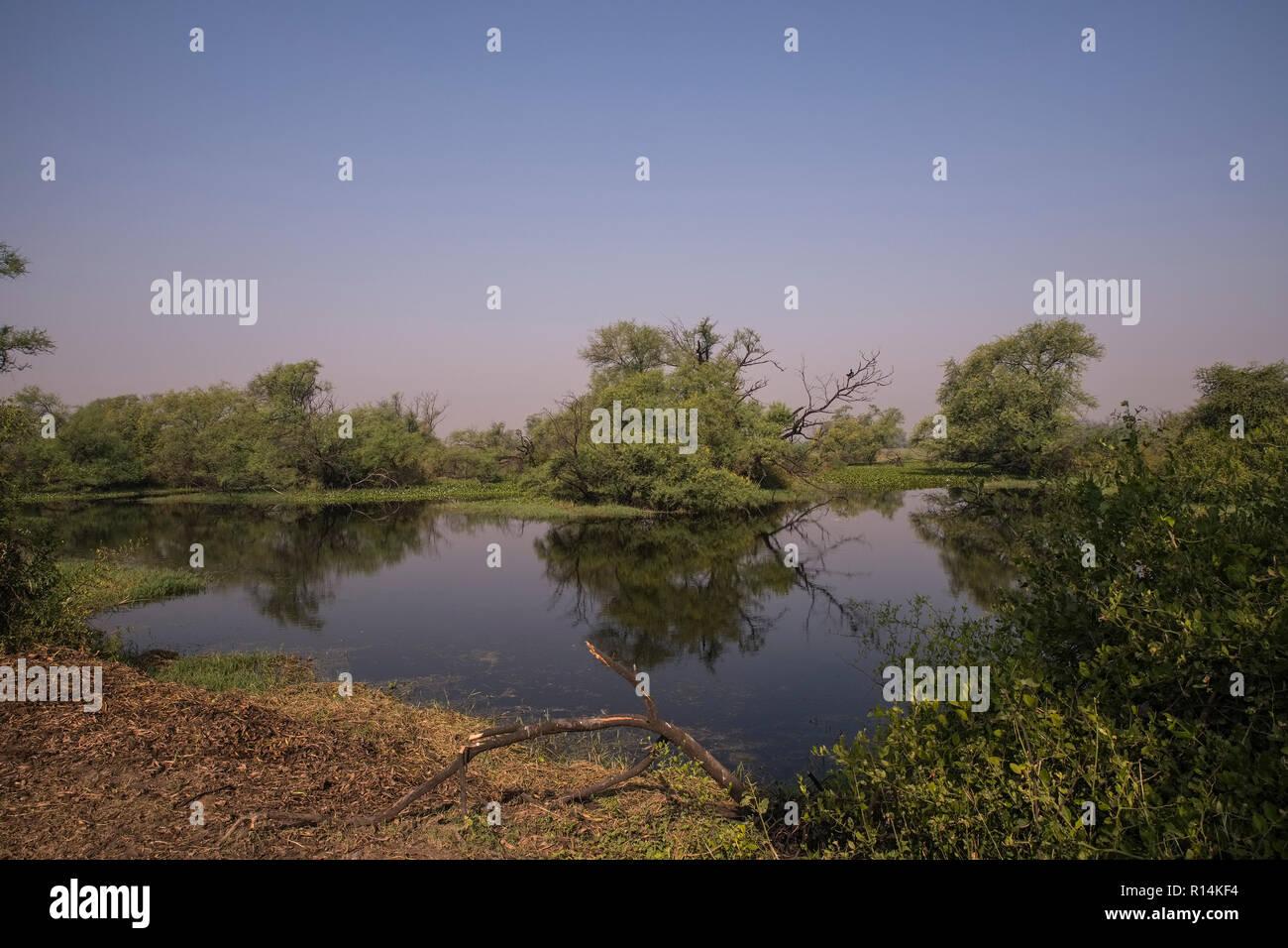 Bharatpur Bird Sanctuary,landscape,wetlands, habitat, grey hornbills,purple herons,painted storks, dependent on water level,Rajasthan,India. - Stock Image