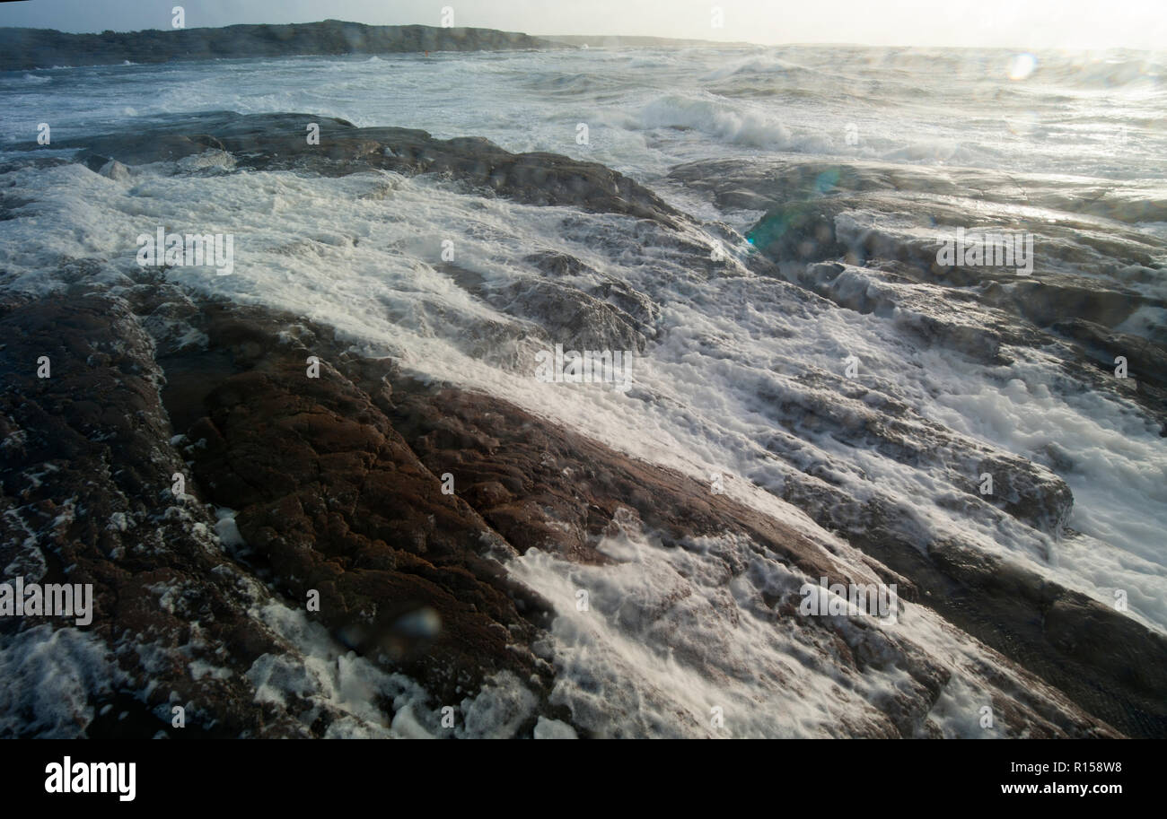 Marine, life, sea, life, ocean, plants, animals, organisms, salt, water, coastal, fundamental, level, nature, Shorelines, habitats, - Stock Image