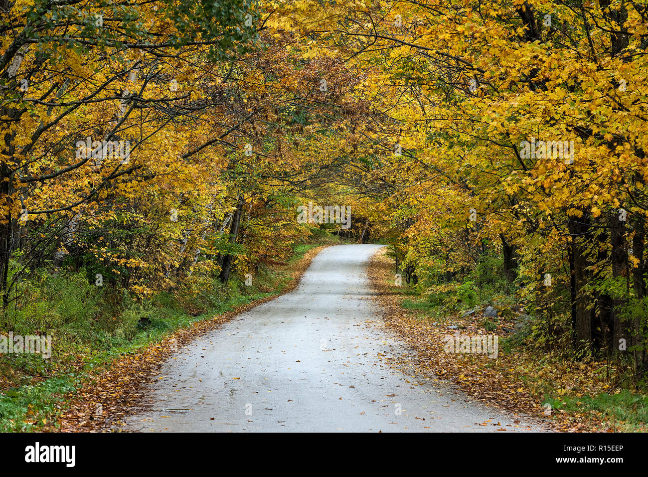 Unpaved country road with autumn foliage, Cuttingsville, Vermont, USA. - Stock Image