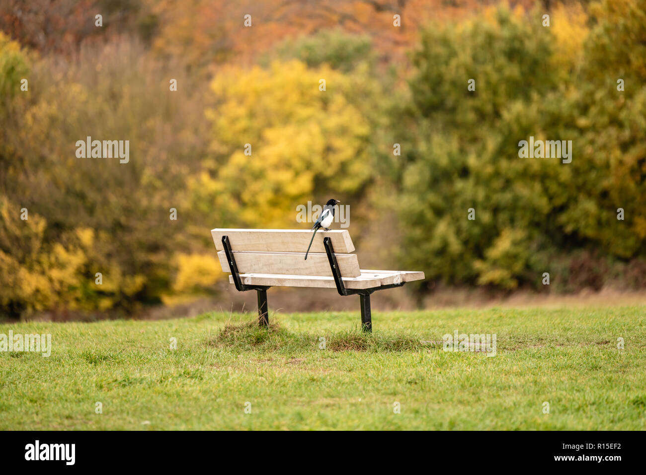 Autumn colours in Hampstead Heath - Stock Image