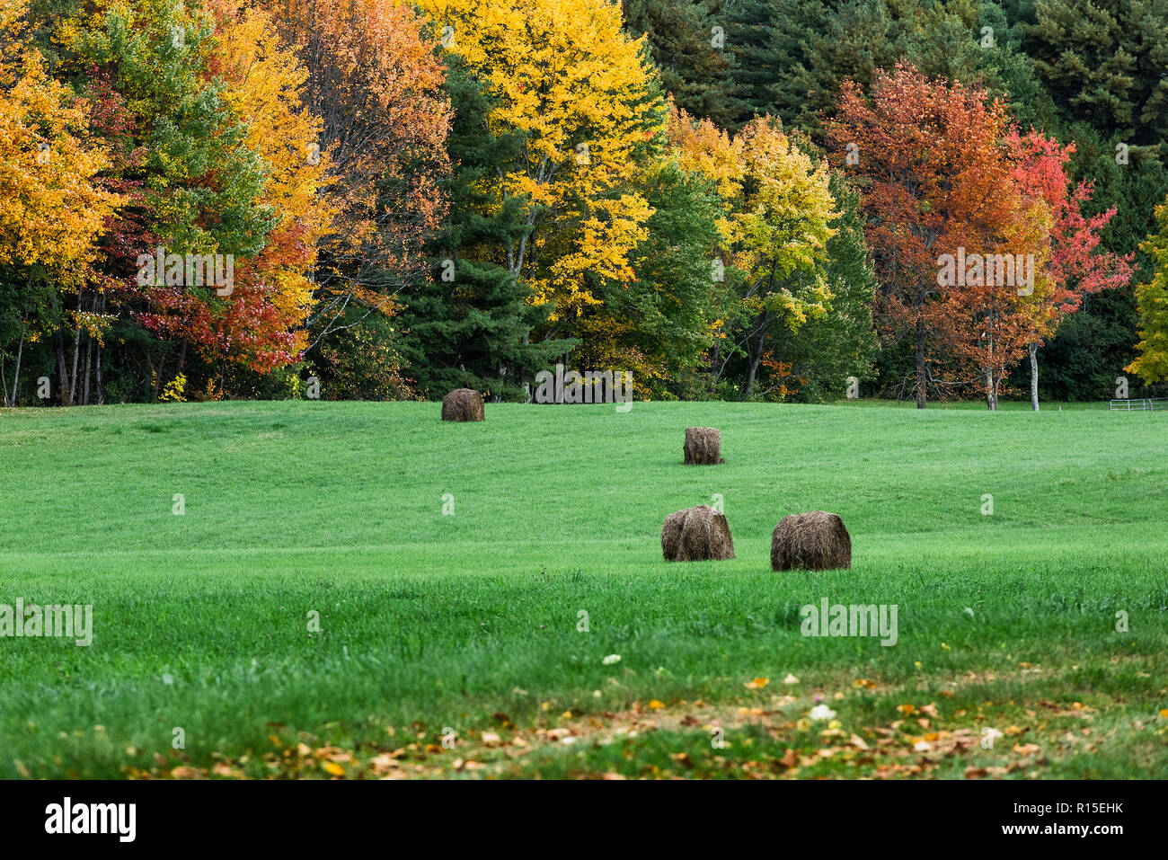 Hay bales in an an autumn field, Brandon, Vermont, USA. - Stock Image