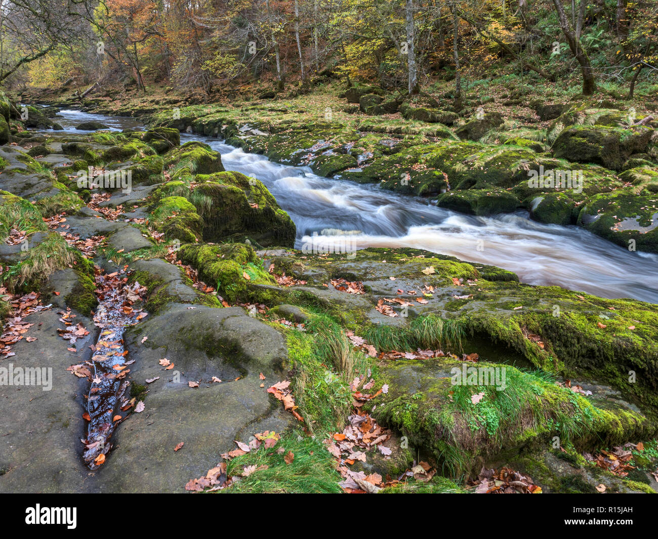 Fast flowing water in the narrow constriction of The Strid on the River Wharfe at Bolton Abbey Yorkshire Dales England - Stock Image