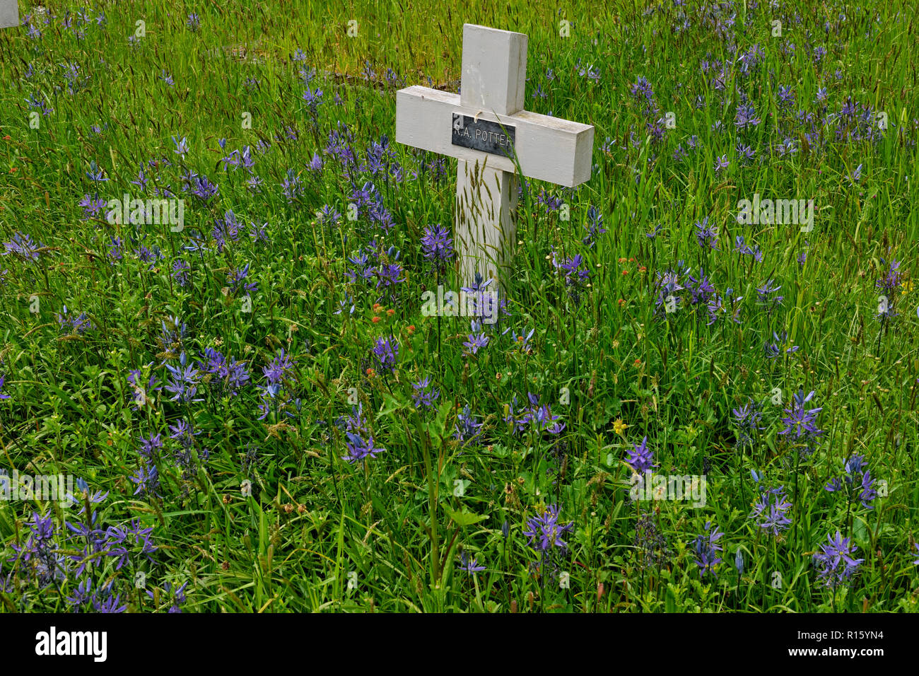 Cemetery and First World War grave markers in Metchosin Heritage Church grounds, Metchosin, BC, Canada - Stock Image